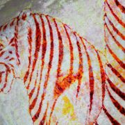 tiger-blanco